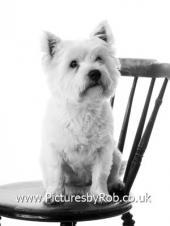 Dog Photographer York